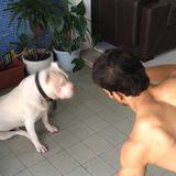 Doggo Support