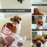 Doggo Comp