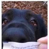 Animal Memes Dump!