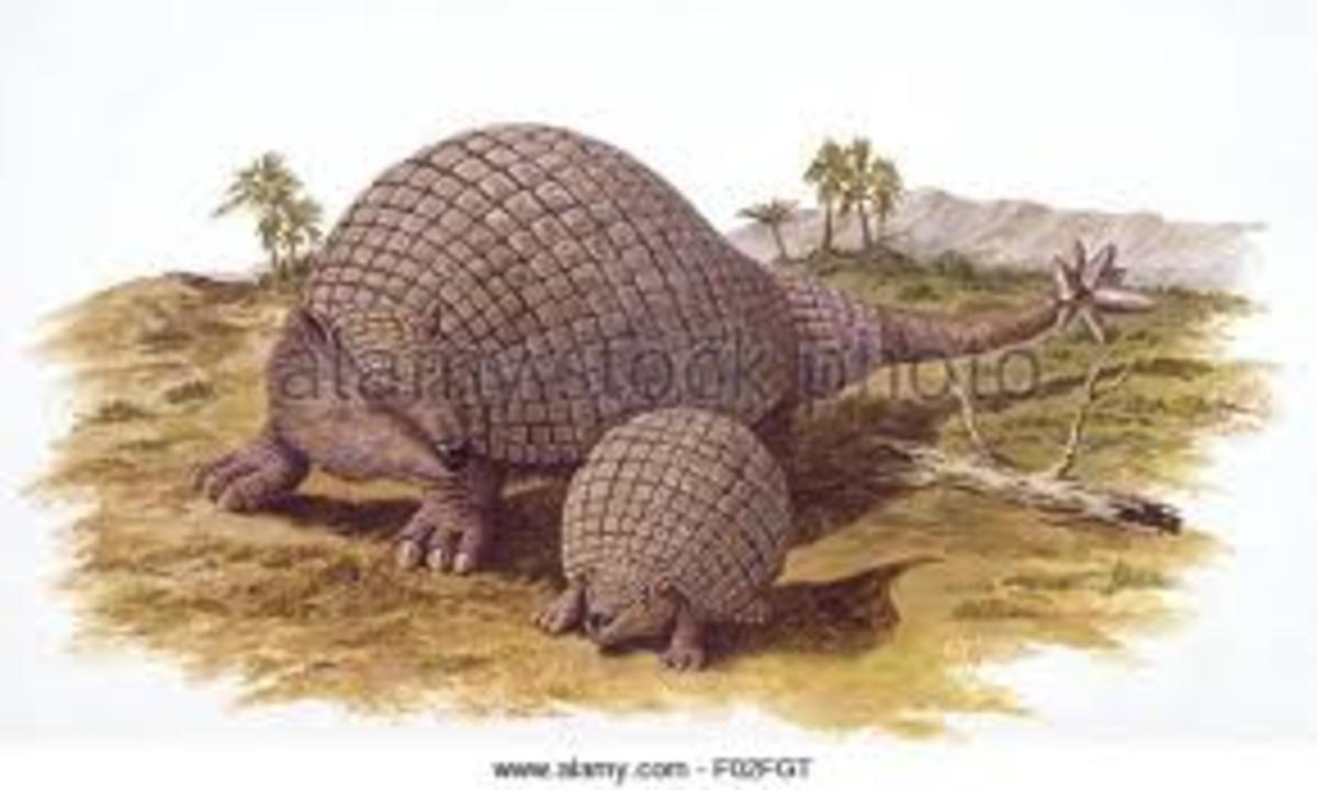 Doedicurus clavicaudatus. Name: Doedicurus clavicaudatus (Pestle Tail) Phonetic: dee-dih-CURE-us Named/Discovered By: Richard Owen, 1847. South America, Argenti Doedicurus clavicaudatus Name: (Pestle Tail) Phonetic: dee-dih-CURE-us Named/Discovered By: Richard Owen 1847 South America Argenti