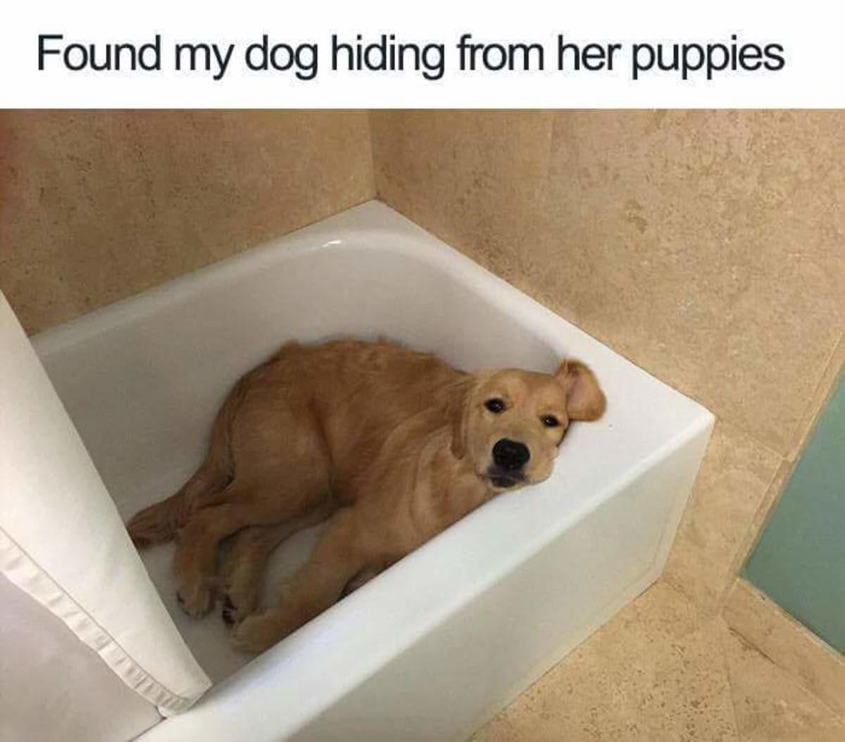Doggo Comp: San Andreas. .. you are what you eat too soon? Cute Dog doggo