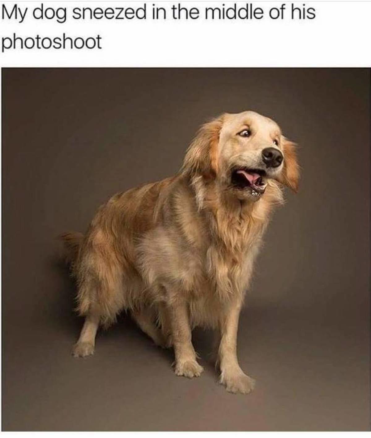 Doggo Comp: The Numbers, Mason!. . photoshoot. this whole comp cheered me up especially the last one doggo Dog Cute