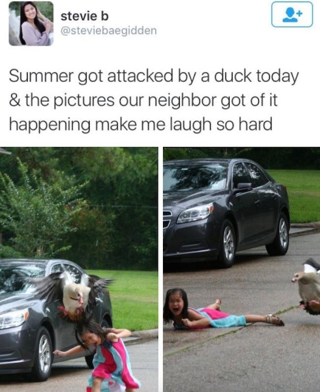 duck. . duck