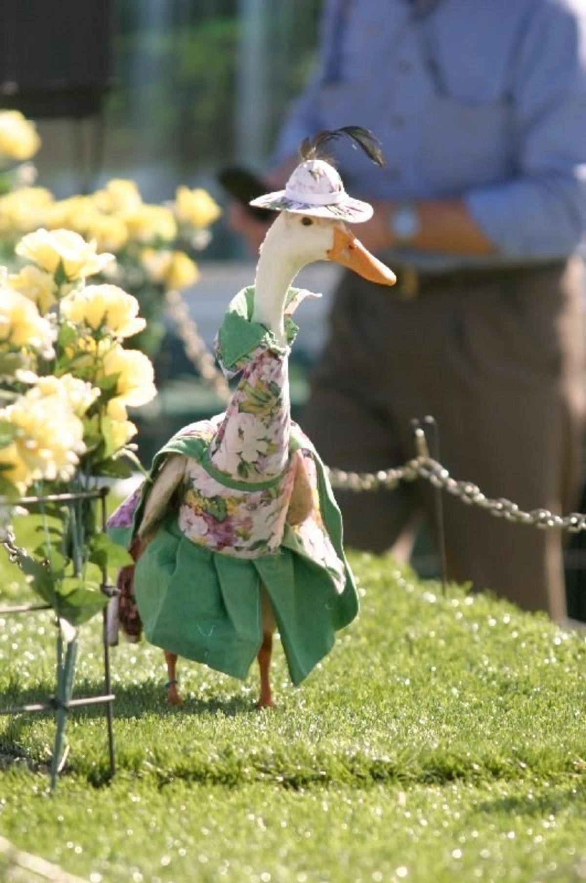 Ducks. .. How do you keep them still long enough to dress them? Ducks How do you keep them still long enough to dress them?