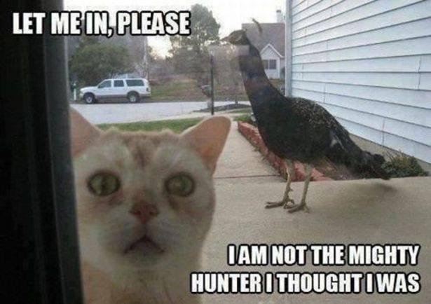 halp. .. Rainbow chickens are annoying. halp Rainbow chickens are annoying