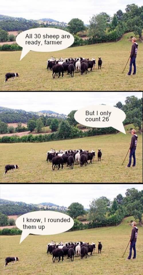 Puns are fun. . All itit] sheep are ready, farmer I know, I rounded them up Puns are fun All itit] sheep ready farmer I know rounded them up