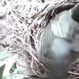 bird of the nest