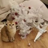 My cat's ritual