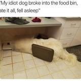 Doggy Gluten