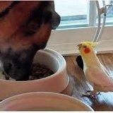 Burb and doggo